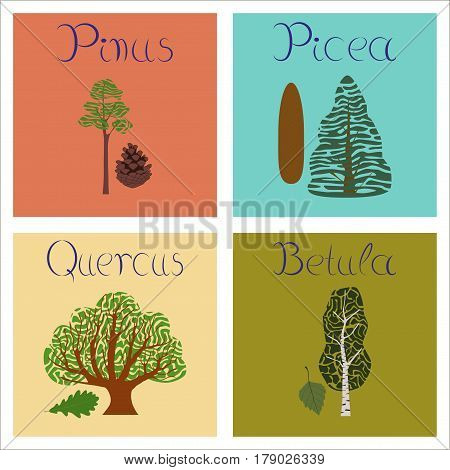 assembly of flat Illustrations nature Pinus Picea Quercus Betula