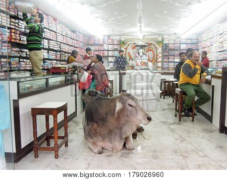 Sacred Cow Lying In The Middle Of A Shop