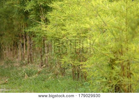 bamboo tree near road in the forest.