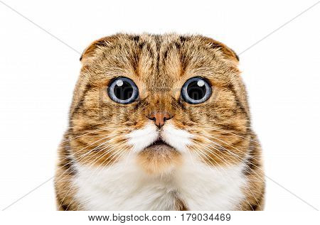 Portrait of funny cat isolated on a white background