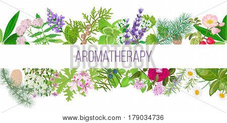 Big banner set of popular essential oil plants. Ornament with text aromatherapy. Peppermint, lavender, sage, melissa, Rose, Geranium, Chamomile, oregano etc. For cosmetics, spa, health care, perfumery