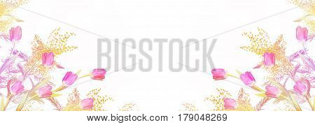 Bright colorful spring flower mimosa isolated on white background.
