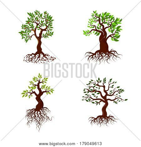 Trees with green leaves and roots vector tree planting collection. Nature green tree with root and leaf, illustration of set green tree