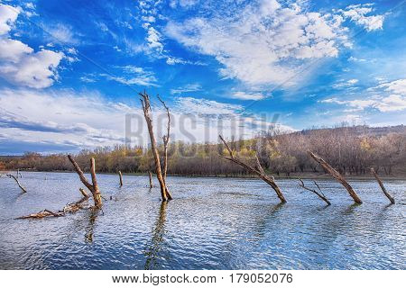 landscape with trees in water after inundation