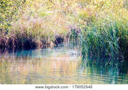 Lush offshore vegetation shot in autumn (Slovenia, Zelenci).