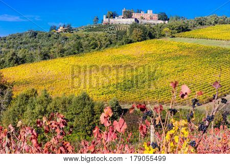 Traditional scenery of Tuscany .beautiful Chianti vine region in Italy
