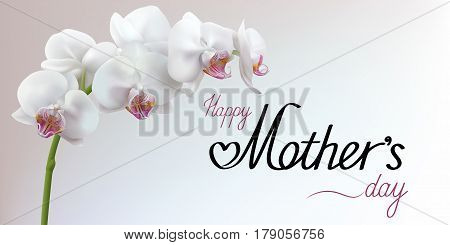 Happy Mothers Day greeting card with flower. Light gray background with white realistic orchid. Horizontal vector illustration.
