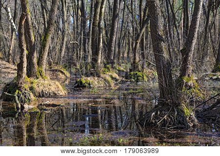 Spring floods in the deciduous forest. The sky is reflected in the water. March landscape. Ukraine.