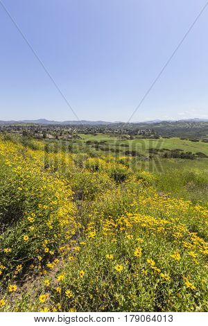 Spring meadow in Wildwood Regional Park in the Thousand Oaks community of Ventura County, California.