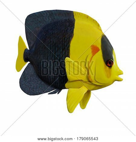3D Rendering Angelfish On White