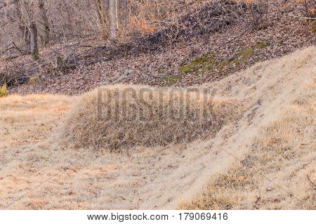 Unmarked burial mound in a wooded area on the side of a mountain