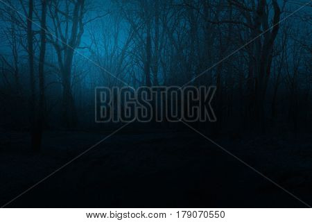 Spooky foggy mountain forest at night. Spooky trees in a black forest