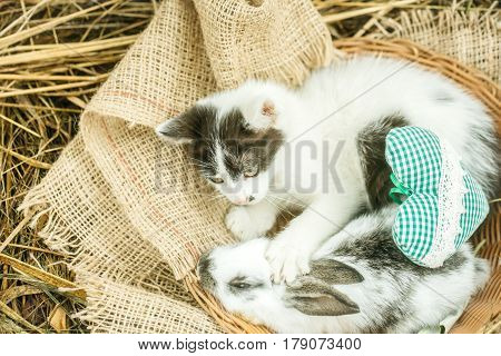 Cute Small Rabbit And Little Cat With Green Heart