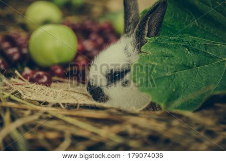 Cute Rabbit Hiding Behind Green Leaf With Cherry And Apples