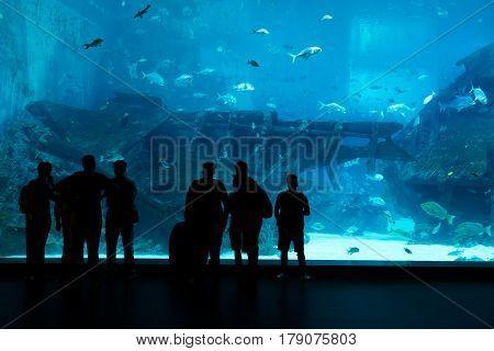 Silhouettes of people against a big aquarium. Tourist looking fish in aquarium.