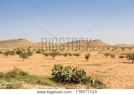 Beautiful asian savannah background with sparse vegetation