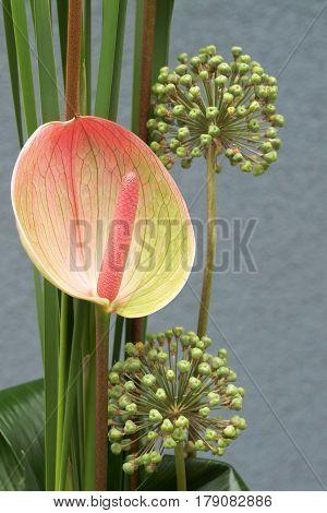 Composition flower Anthurium (Anthurium Schott) and Garlic (Allium)
