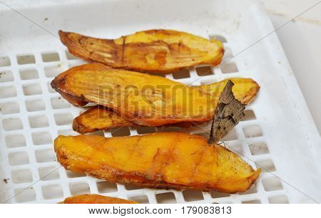 brown butterfly feeding ripen mango seed on white plastic tray