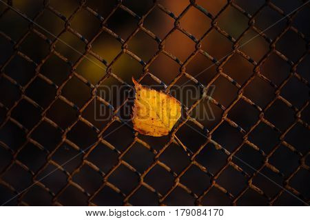 The fallen sheet was stuck in the fence and illuminated by headlights.