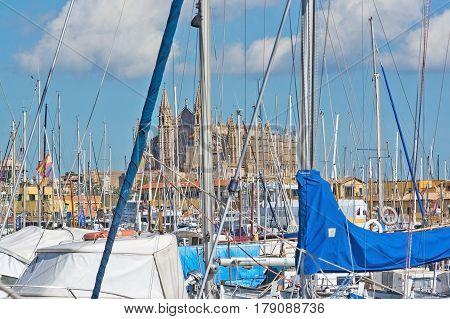 Masts In Marina Closeup