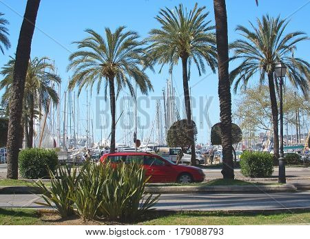 Paseo Maritimo Traffic Palms And Marina