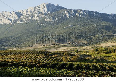Vineyards of Rioja. Located in Laguardia Rioja Alavesa Basque Country Spain. In the background is located