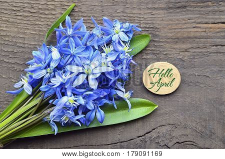 Hello April greeting card with blue first spring flowers.Bouquet of blue snowdrops.Blue Scilla flowers (Scilla siberica,Squill) on old wooden background.Selective focus.