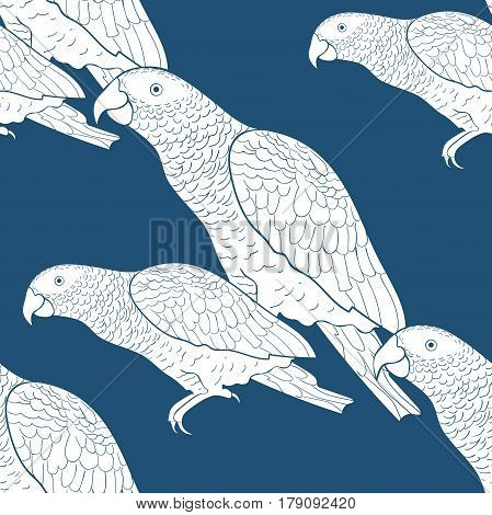 Seamless Pattern Jaco Parrot The Blue  Africa  Vector Illustration