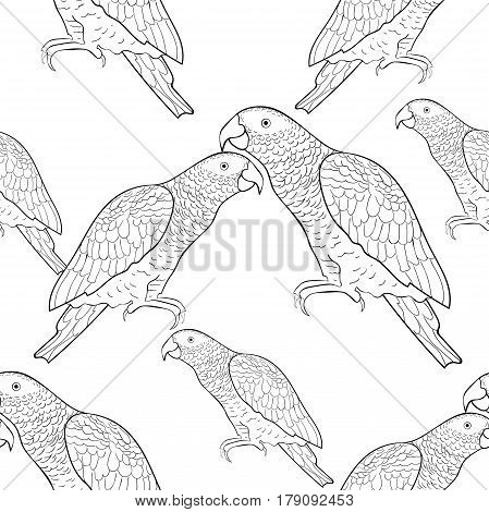 Seamless Pattern Jaco Parrot The Coloring  Vector Illustration