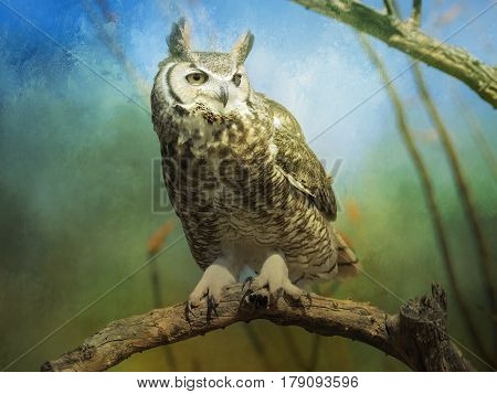 Great horned owl photo and digital enhancement