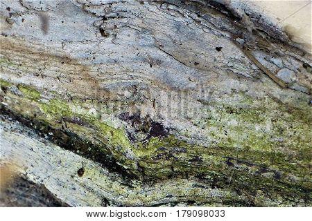 Tree bark texture. Tree bark covered with moss.