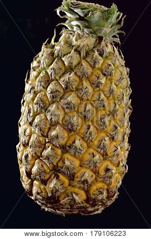 Pineapple thick-skinned oval-shaped juicy fruit of southern plant