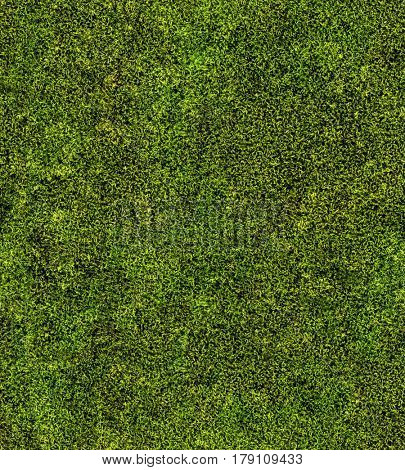 close up of green moss seamless background
