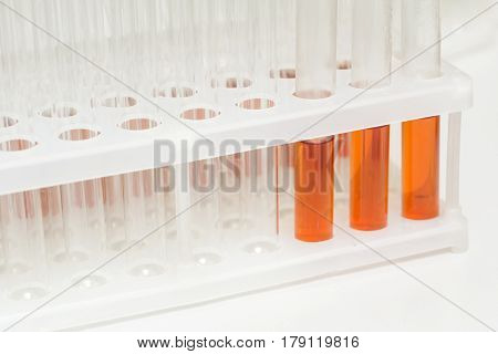 Laboratory glass test tubes filled with orange liquid for an experiment in a science research lab. Analyzes