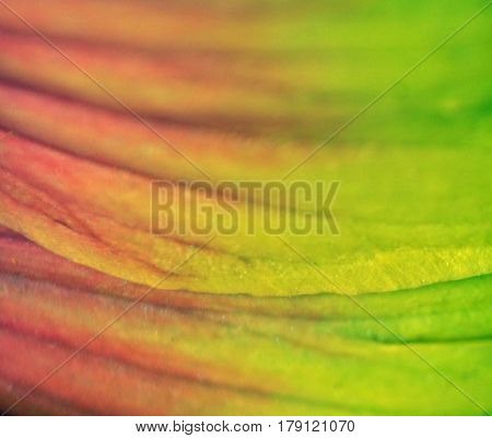 a macro shot of colorful flower leaves