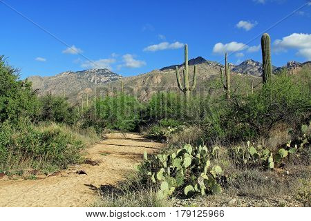 Hiking trail in Bear Canyon in Sabino Canyon Recreation Area Park in the Sonoran Desert along the Santa Catalina Mountains in Tucson, Arizona.