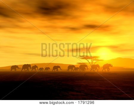 African Spirit - The Walking Tour Of African Elephants