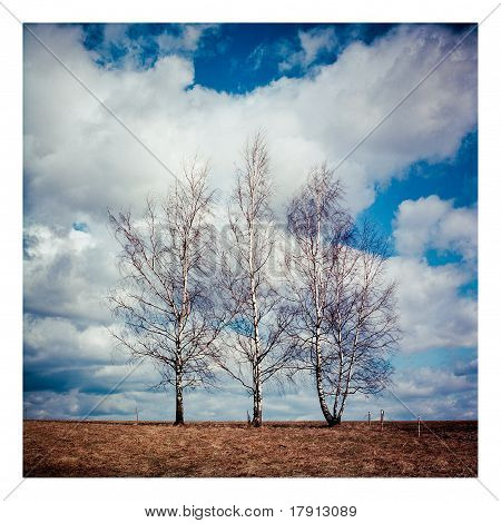 3 Árboles