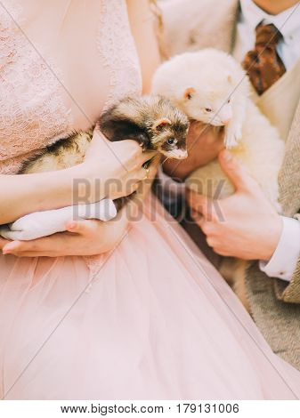 The horixontal photo of the white and brown ferrets held by the hands of the vintage dressed bride and groom