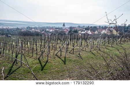 spring vineyard with Pavlov village and Nove Mlyny water reservoir bellow Palava mountains in South Moravia