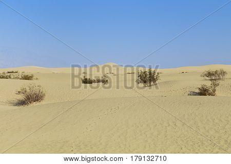 Golden sand dunes as Mesquite Flat Dunes in California