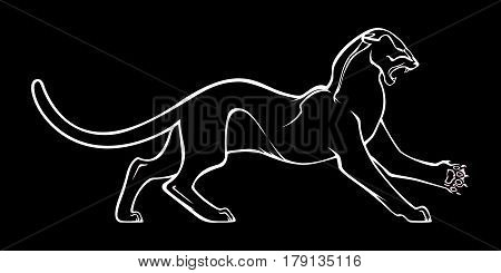 White silhouette of aggressive panther on black background. Vector illustration. Outline image.