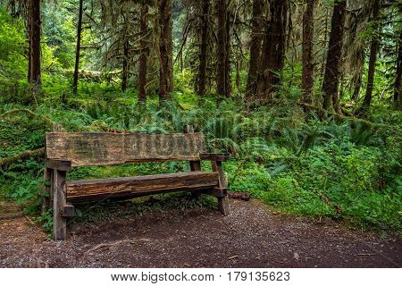 Bench in the Hoh Forest to rest on the hiking trail, surrounded by trees