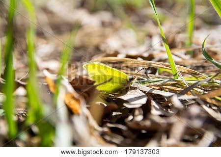 Butterfly between grass and leaves close-up image