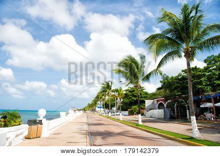 Street Road With Waterfront Near Green Palm Trees, Cozumel, Mexico