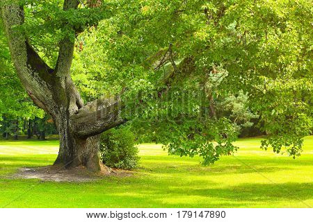 Tree With Green Saturated Leaves