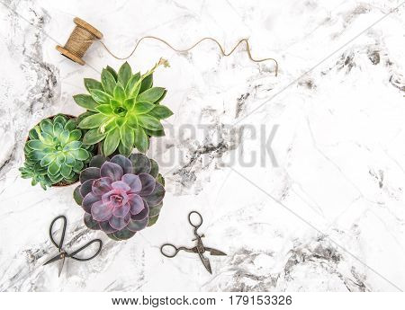 Succulent plants hobby creative Floral flat lay