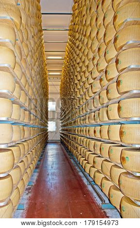 Shelving With Cheese