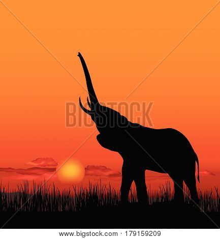 African landscape with animal elefant silhouette. Savanna wildlife nature. Sunset skyline background.