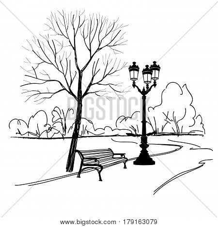 Bench in park with tree and streetlamp. City park landscape